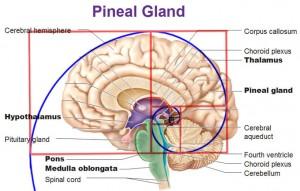 glanda pineala si geometria sacra